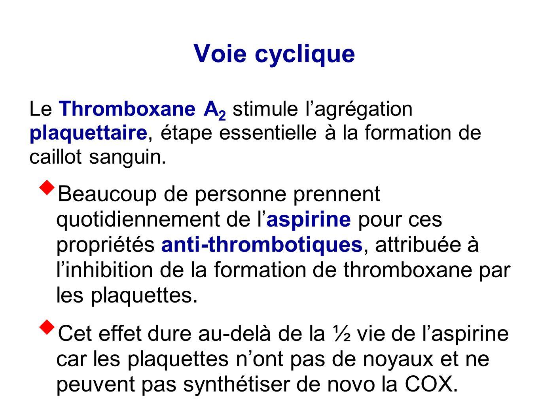 Le Thromboxane A 2 stimule l'agrégation plaquettaire, étape essentielle à la formation de caillot sanguin.  Beaucoup de personne prennent quotidienne