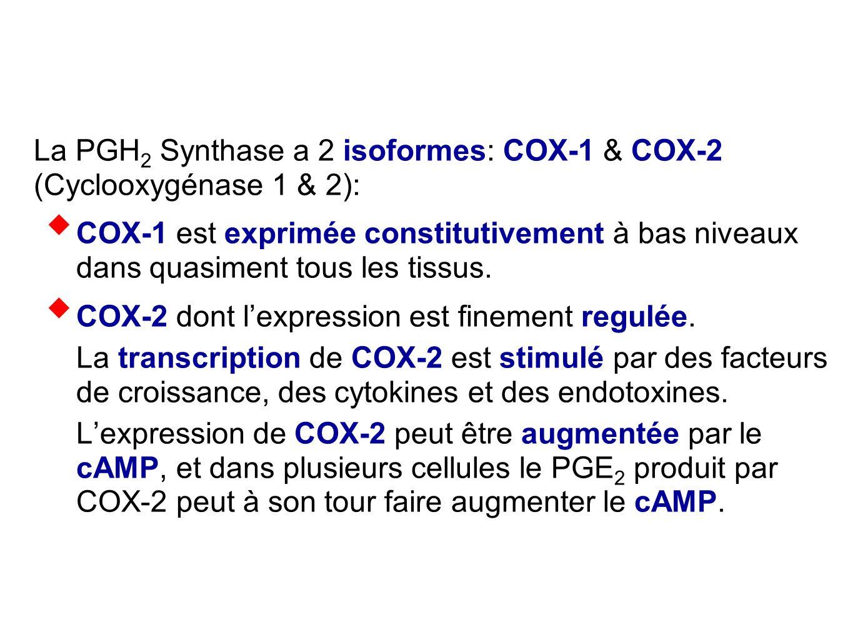 La PGH 2 Synthase a 2 isoformes: COX-1 & COX-2 (Cyclooxygénase 1 & 2):  COX-1 est exprimée constitutivement à bas niveaux dans quasiment tous les tis