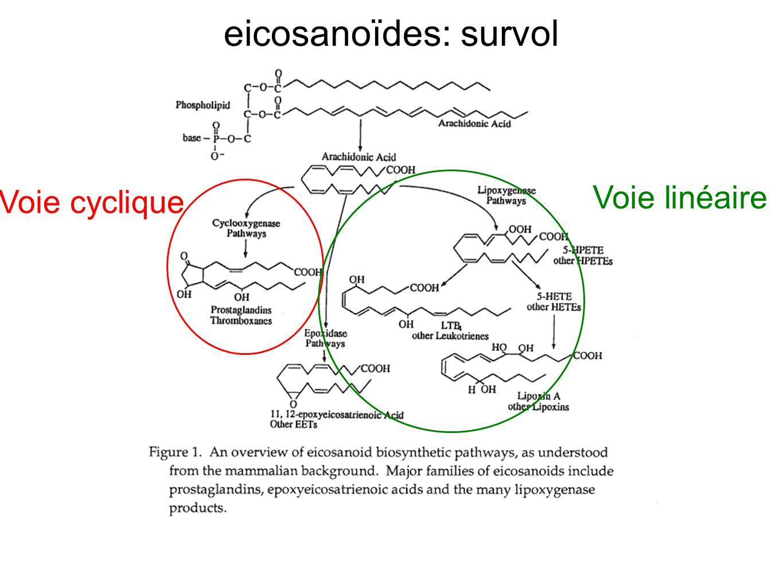 eicosanoïdes: survol Voie cyclique Voie linéaire