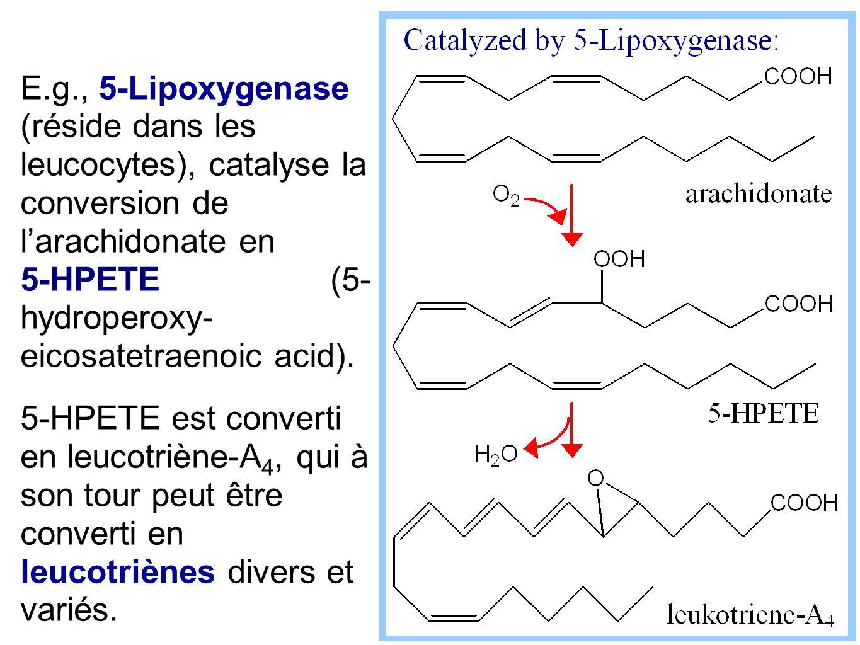 E.g., 5-Lipoxygenase (réside dans les leucocytes), catalyse la conversion de l'arachidonate en 5-HPETE (5- hydroperoxy- eicosatetraenoic acid). 5-HPET