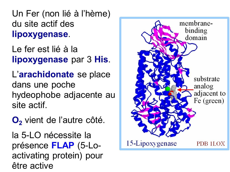 Un Fer (non lié à l'hème) du site actif des lipoxygenase. Le fer est lié à la lipoxygenase par 3 His. L'arachidonate se place dans une poche hydeophob