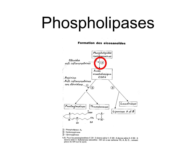 Arachidonate est relâché de son phospholipide par hydrolyse catalysée par la Phospholipase A 2.