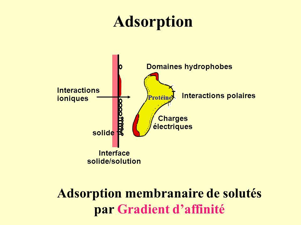 Adsorption Adsorption membranaire de solutés par Gradient d'affinité