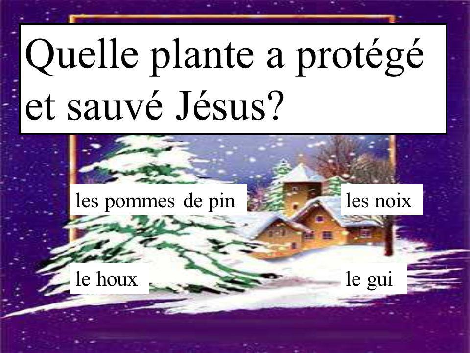 Quelle plante a protégé et sauvé Jésus? les pommes de pin le guile houx les noix