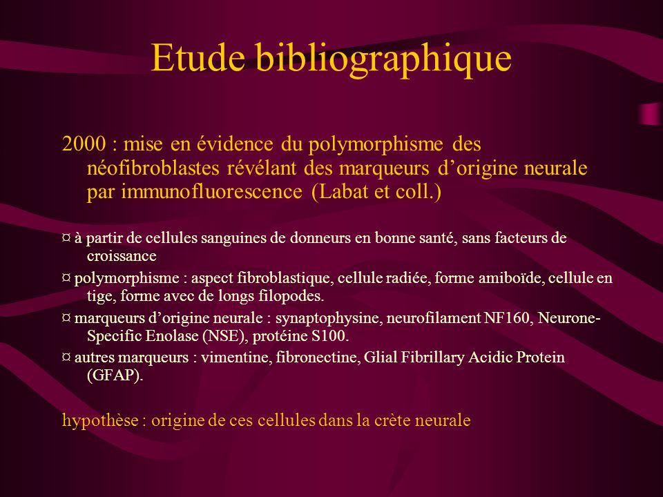 Etude bibliographique Les cellules monocytoïdes : Polymorphisme physiologique et origine dans la crète neurale Potentiel de différenciation en : ¤ néofibroblastes (culture sanguine physiologique) ¤ (évent.) cellules microgliales (synthétisant naturellement la lipocortine 1) venant du tube neural ¤ ostéoblastes (ostéomyélosclérose) ¤ chondrocytes (chondrosarcome) ¤ myofibroblastes (fibrose pulmonaire) ¤ cellule sécrétant de l'uromoduline (fibrose vésicale) ¤ cellule synthétisant une matrice extracellulaire PrP-like (tremblante ovine) Conclusion : existence de cellules multipotentes, ectomésenchymateuses, capables de prolifération, conjointement aux cellules souches mésenchymateuses.