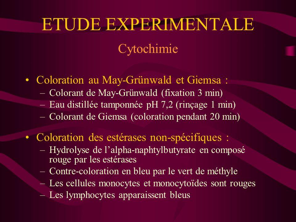 RESULTATS Mise en culture chez le Chien Cellules souches monocytoïdes sans coloration : - Témoin cellules : « œuf sur le plat » et « à dendrites » - Attaque des cellules monocytoïdes par des lymphocytes T (2 heures) :