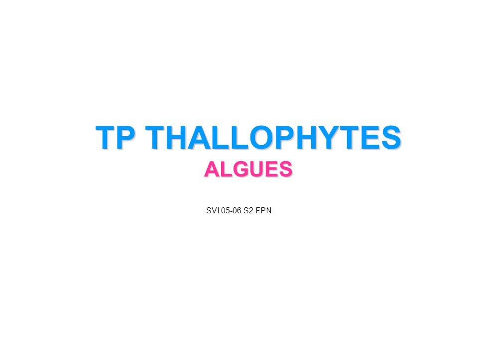 TP THALLOPHYTES ALGUES SVI 05-06 S2 FPN