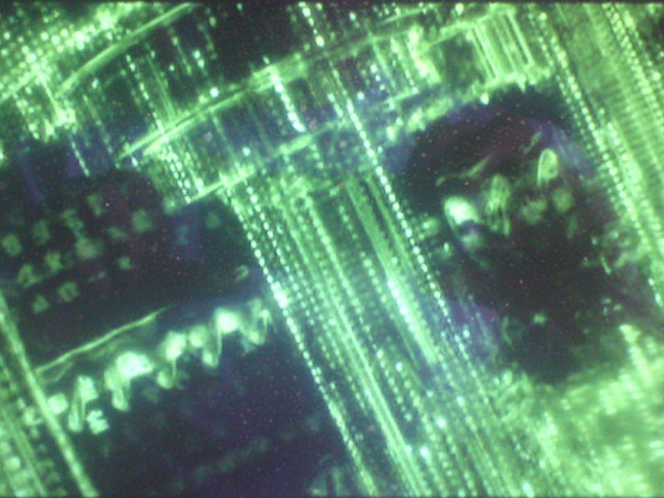Protocoles de la couche physique.Son rôle est de communiquer des bits entre deux ordinateurs.