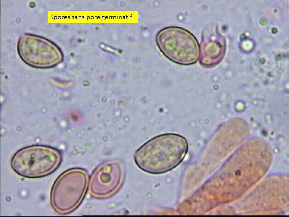 Spores sans pore germinatif