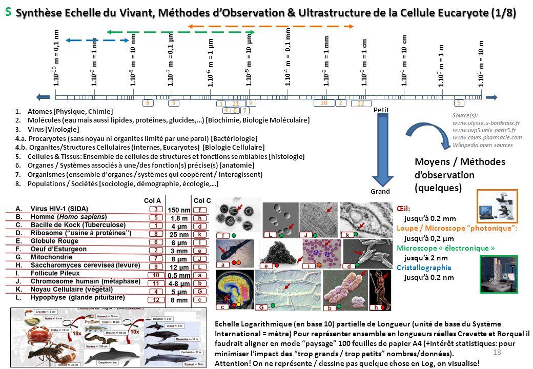 Synthèse Echelle du Vivant, Méthodes d'Observation & Ultrastructure de la Cellule Eucaryote (1/8) 1.10 1 m = 10 m 1.10 -1 m = 10 cm 1.10 0 m = 1 m 1.1