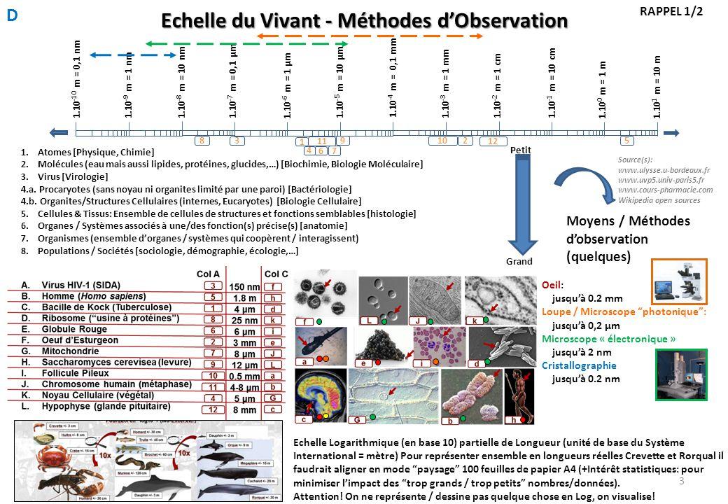 Echelle du Vivant - Méthodes d'Observation 1.10 1 m = 10 m 1.10 -1 m = 10 cm 1.10 0 m = 1 m 1.10 -2 m = 1 cm 1.10 -3 m = 1 mm 1.10 -4 m = 0,1 mm 1.10 -5 m = 10 μm 1.10 -6 m = 1 μm 1.10 -7 m = 0,1 μm 1.10 -8 m = 10 nm 1.10 -9 m = 1 nm 1.10 -10 m = 0,1 nm 3 5 1 98 2 6 7 10 11 4 12 1.Atomes [Physique, Chimie] 2.Molécules (eau mais aussi lipides, protéines, glucides,…) [Biochimie, Biologie Moléculaire] 3.Virus [Virologie] 4.a.