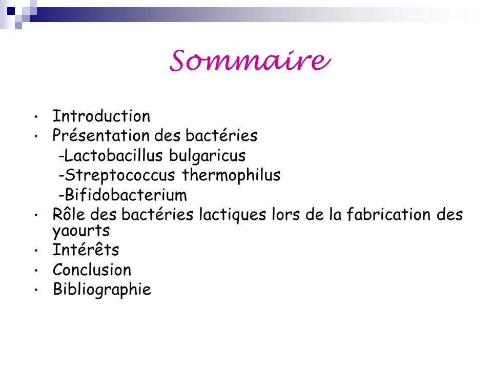Sommaire Introduction Présentation des bactéries -Lactobacillus bulgaricus -Streptococcus thermophilus -Bifidobacterium Rôle des bactéries lactiques l