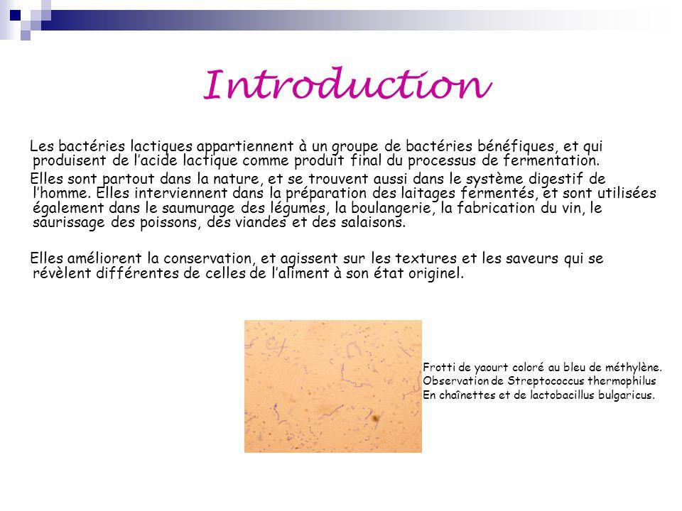 Introduction Les bactéries lactiques appartiennent à un groupe de bactéries bénéfiques, et qui produisent de l'acide lactique comme produit final du p