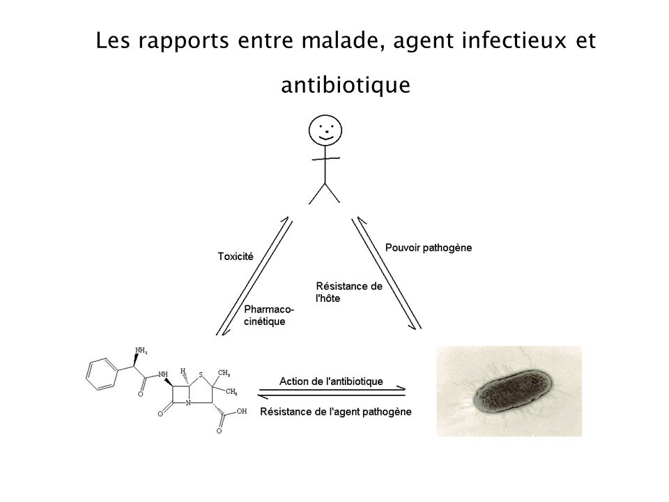 2. Classification des antibiotiques