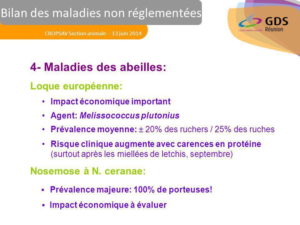 Réunion des Vétérinaires Sanitaires 4- Maladies des abeilles: Loque européenne: Impact économique important Agent: Melissococcus plutonius Prévalence