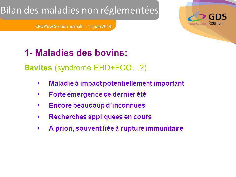 Réunion des Vétérinaires Sanitaires 1- Maladies des bovins: Bavites (syndrome EHD+FCO…?) Maladie à impact potentiellement important Forte émergence ce