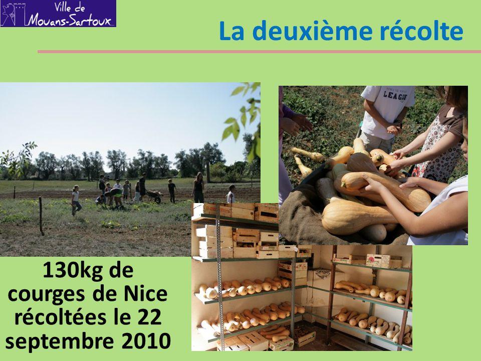 La deuxième récolte 130kg de courges de Nice récoltées le 22 septembre 2010
