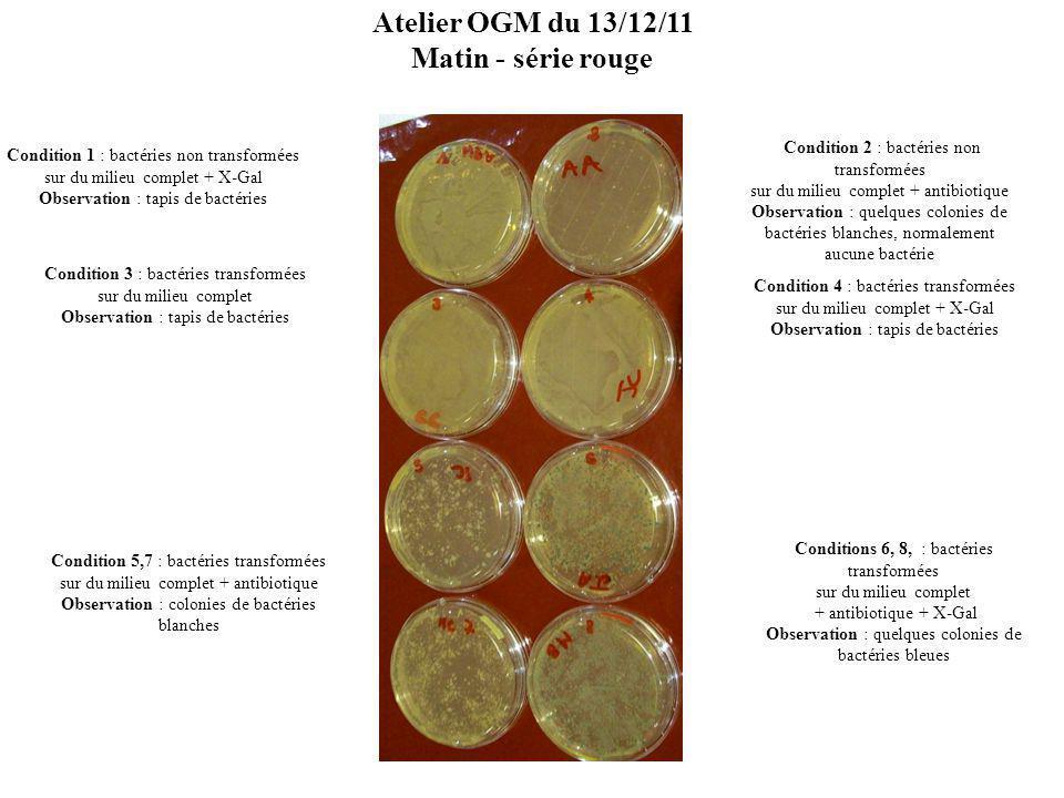 Condition 1 : bactéries non transformées sur du milieu complet + X-Gal Observation : tapis de bactéries Condition 3 : bactéries transformées sur du milieu complet Observation : tapis de bactéries Condition 5 : bactéries transformées sur du milieu complet + antibiotique Observation : normalement, colonies de bactéries blanches – là, rien .