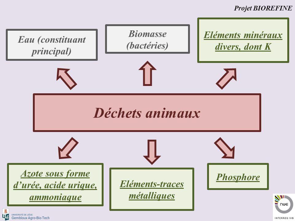 Déchets animaux Eau (constituant principal) Biomasse (bactéries) Azote sous forme d'urée, acide urique, ammoniaque Phosphore Eléments minéraux divers, dont K Eléments-traces métalliques Projet BIOREFINE
