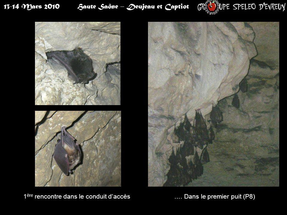 13-14 Mars 2010Haute Saône – Deujeau et Captiot 1 ère rencontre dans le conduit d'accès…. Dans le premier puit (P8)