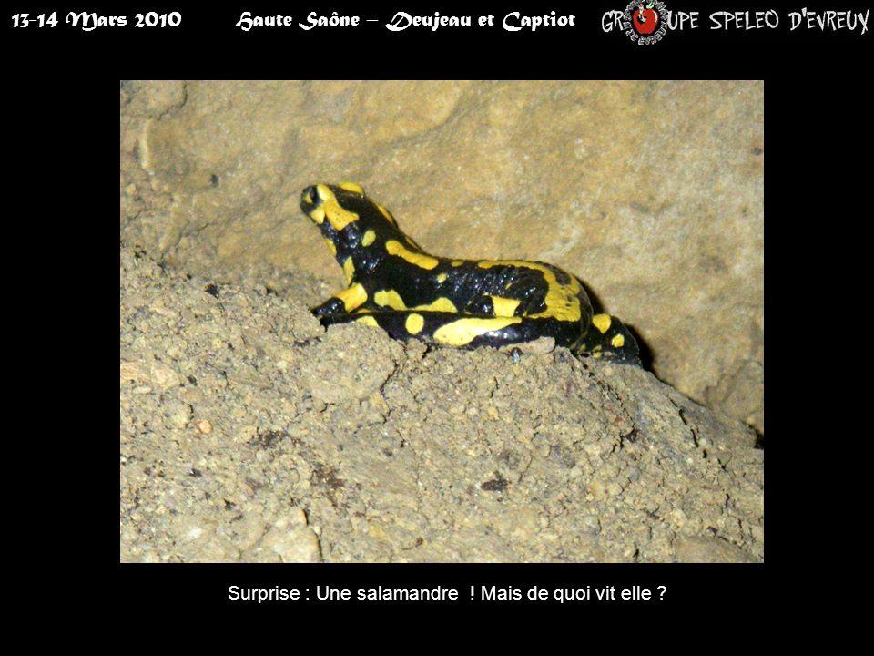 13-14 Mars 2010Haute Saône – Deujeau et Captiot Surprise : Une salamandre ! Mais de quoi vit elle ?