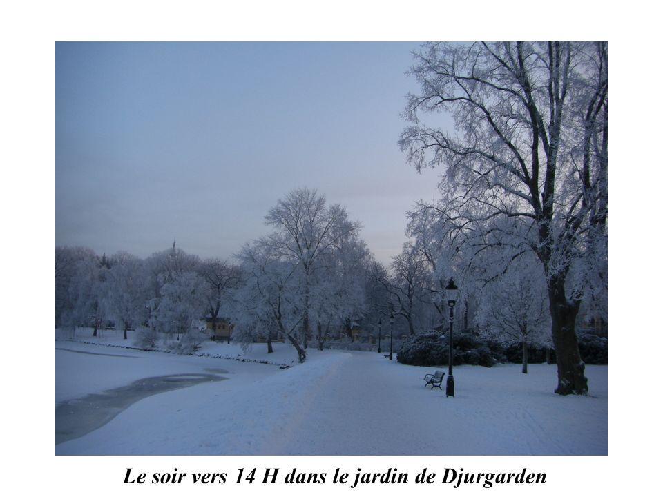 Le soir vers 14 H dans le jardin de Djurgarden