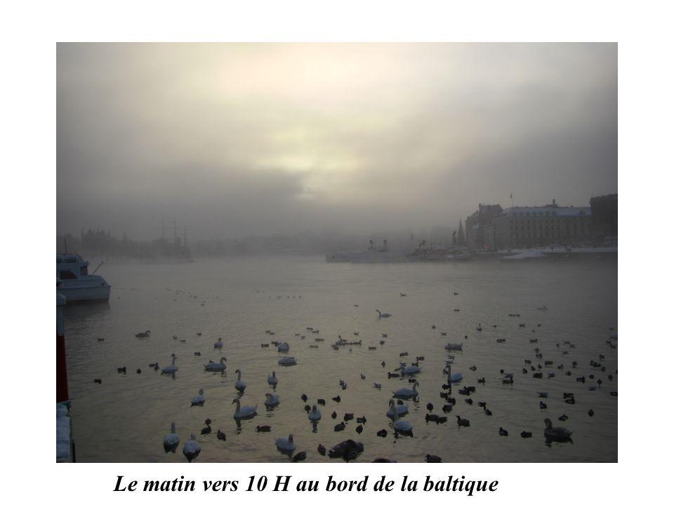 Le matin vers 10 H au bord de la baltique