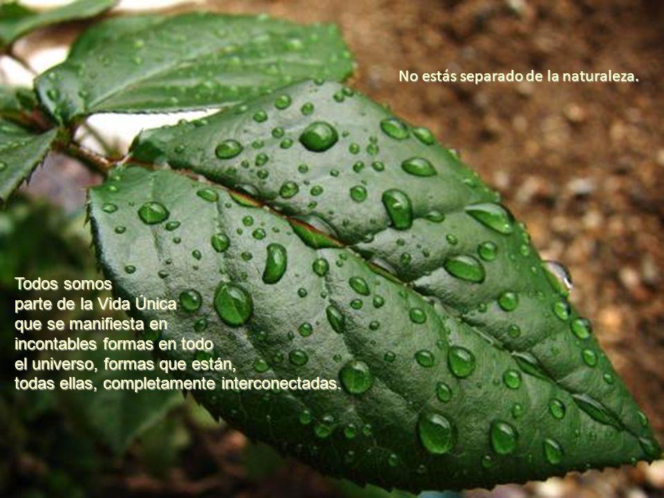 No estás separado de la naturaleza. Todos somos parte de la Vida Única que se manifiesta en incontables formas en todo el universo, formas que están,