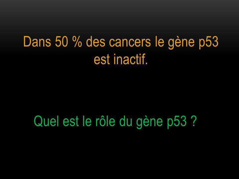 Dans 50 % des cancers le gène p53 est inactif. Quel est le rôle du gène p53 ?