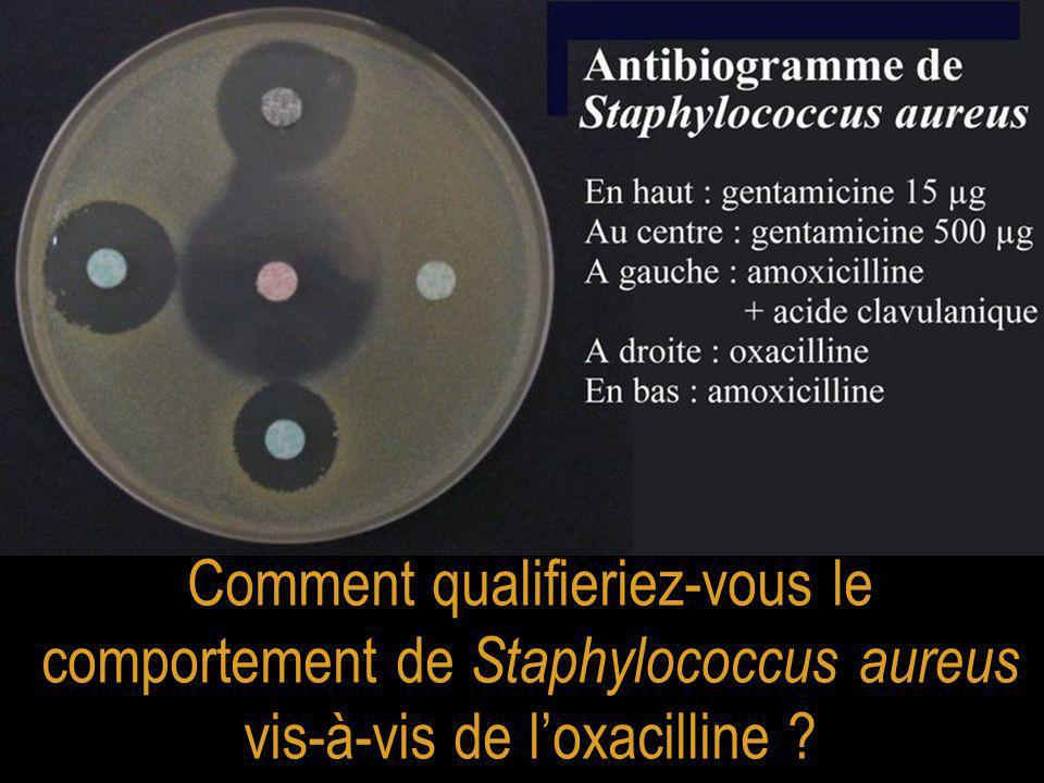 Comment qualifieriez-vous le comportement de Staphylococcus aureus vis-à-vis de l'oxacilline ?