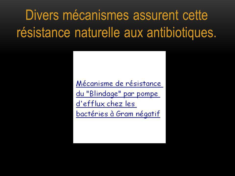Divers mécanismes assurent cette résistance naturelle aux antibiotiques.