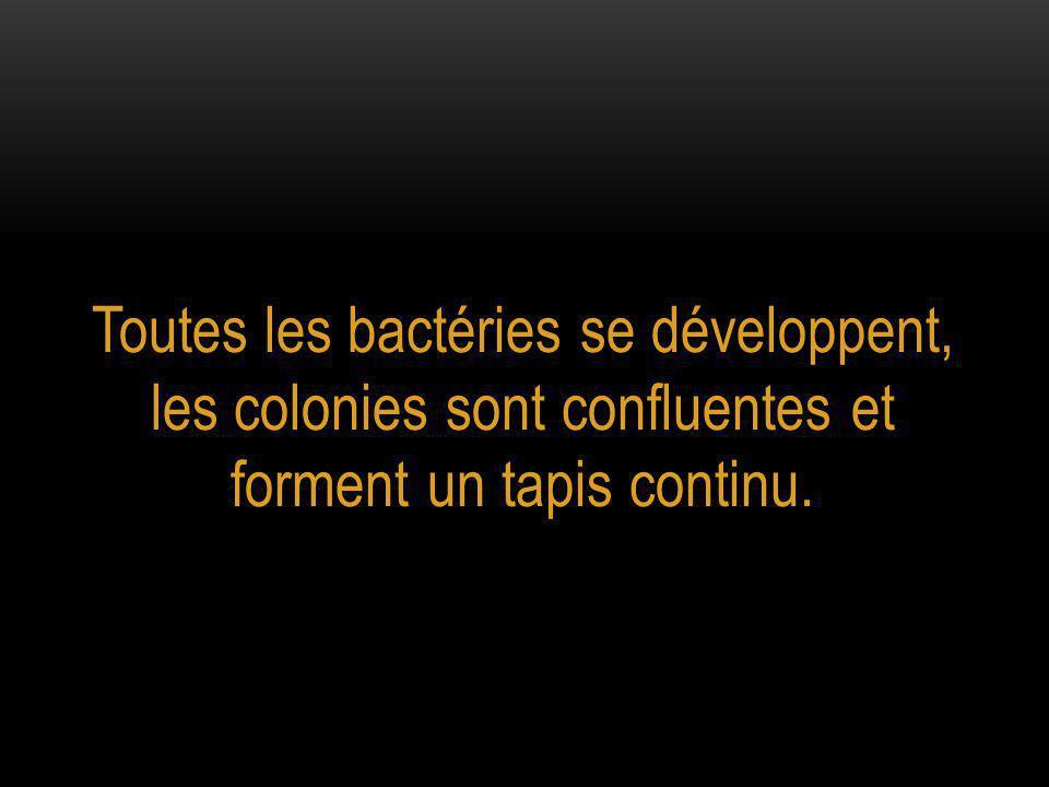 Toutes les bactéries se développent, les colonies sont confluentes et forment un tapis continu.