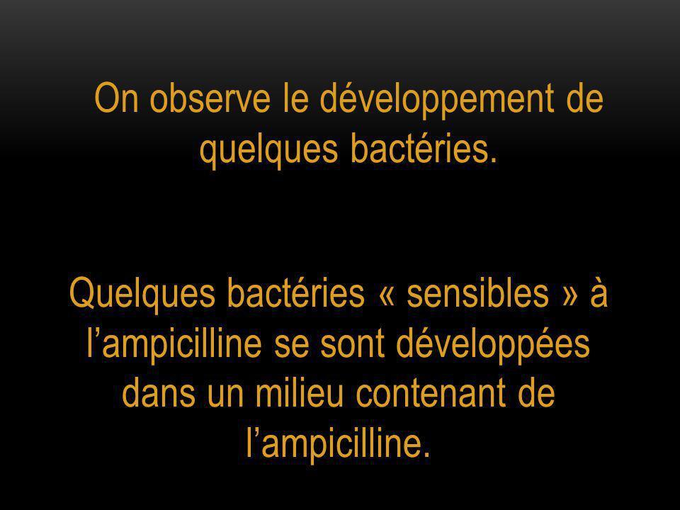 Quelques bactéries « sensibles » à l'ampicilline se sont développées dans un milieu contenant de l'ampicilline.