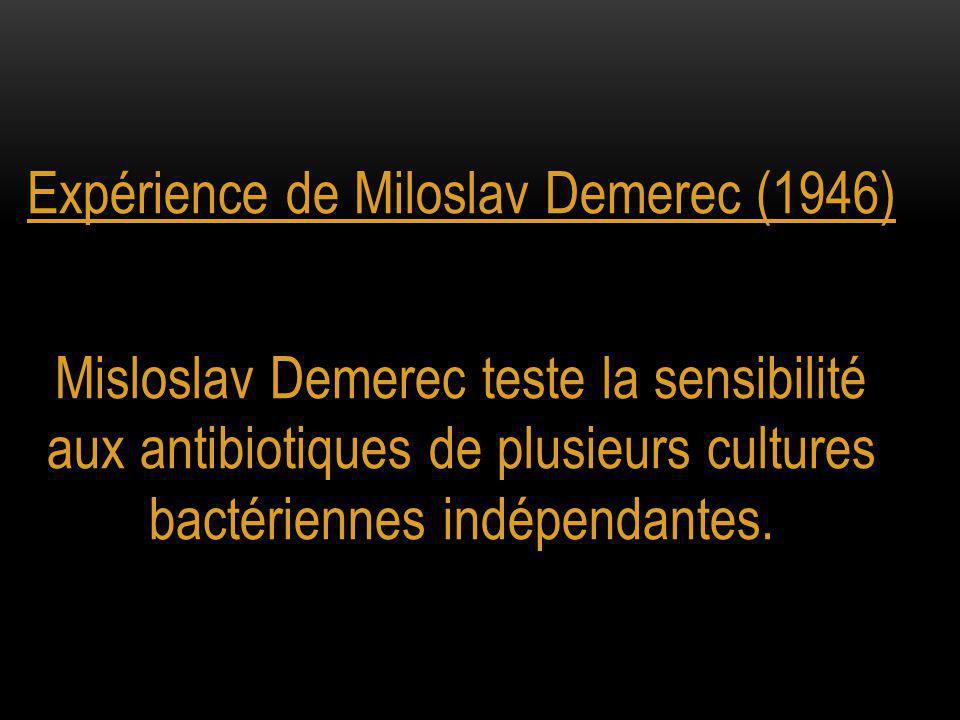 Expérience de Miloslav Demerec (1946) Misloslav Demerec teste la sensibilité aux antibiotiques de plusieurs cultures bactériennes indépendantes.