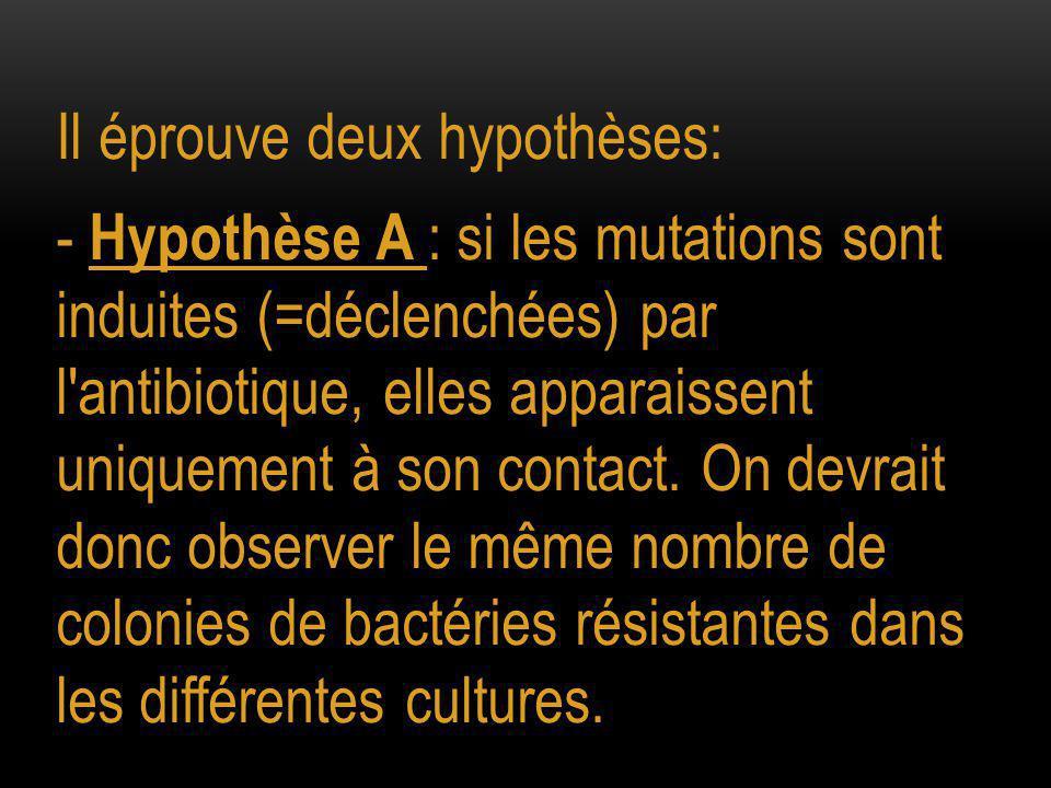 Il éprouve deux hypothèses: - Hypothèse A : si les mutations sont induites (=déclenchées) par l antibiotique, elles apparaissent uniquement à son contact.