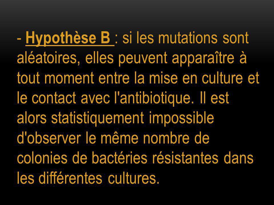 - Hypothèse B : si les mutations sont aléatoires, elles peuvent apparaître à tout moment entre la mise en culture et le contact avec l antibiotique.