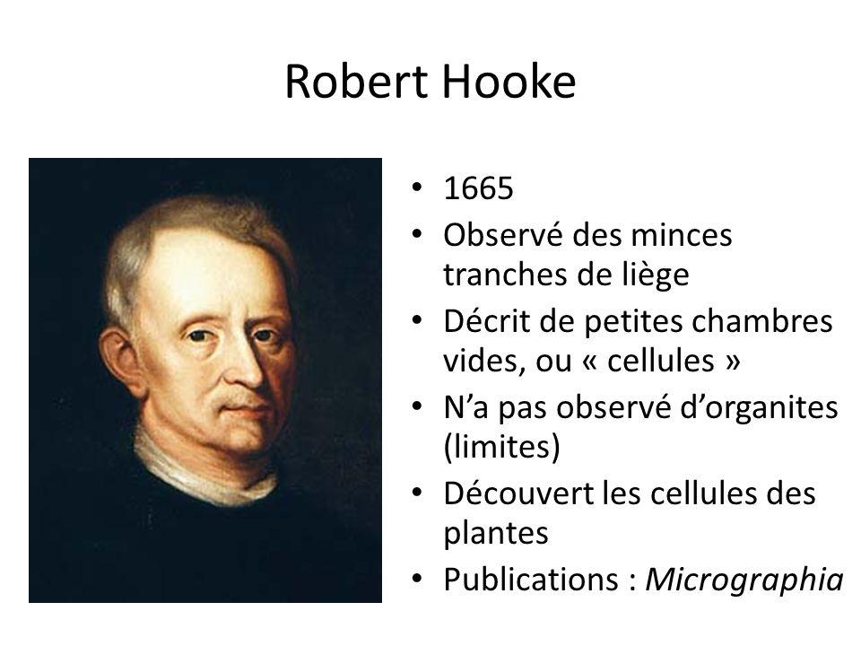 Robert Hooke 1665 Observé des minces tranches de liège Décrit de petites chambres vides, ou « cellules » N'a pas observé d'organites (limites) Découvert les cellules des plantes Publications : Micrographia
