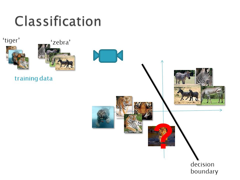 'zebra' 'tiger' training data decision boundary