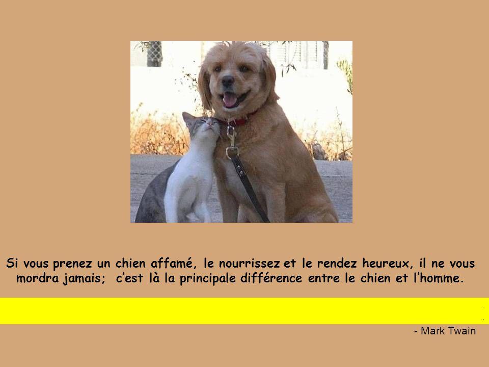 ... …les hommes et les chiens n'ont qu'à se le tenir pour dit !!! Les femmes et les chats font ce qui leur plait...