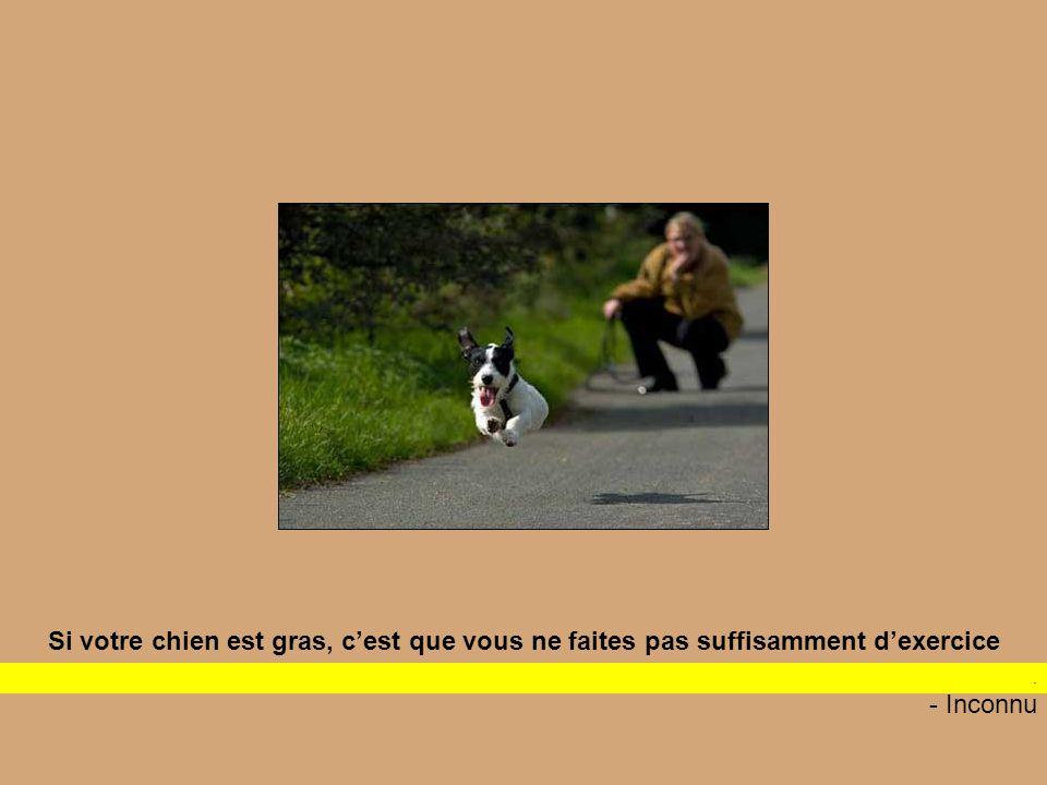 Si votre chien est gras, c'est que vous ne faites pas suffisamment d'exercice If your dog is fat, you aren t getting enough exercise - Inconnu.