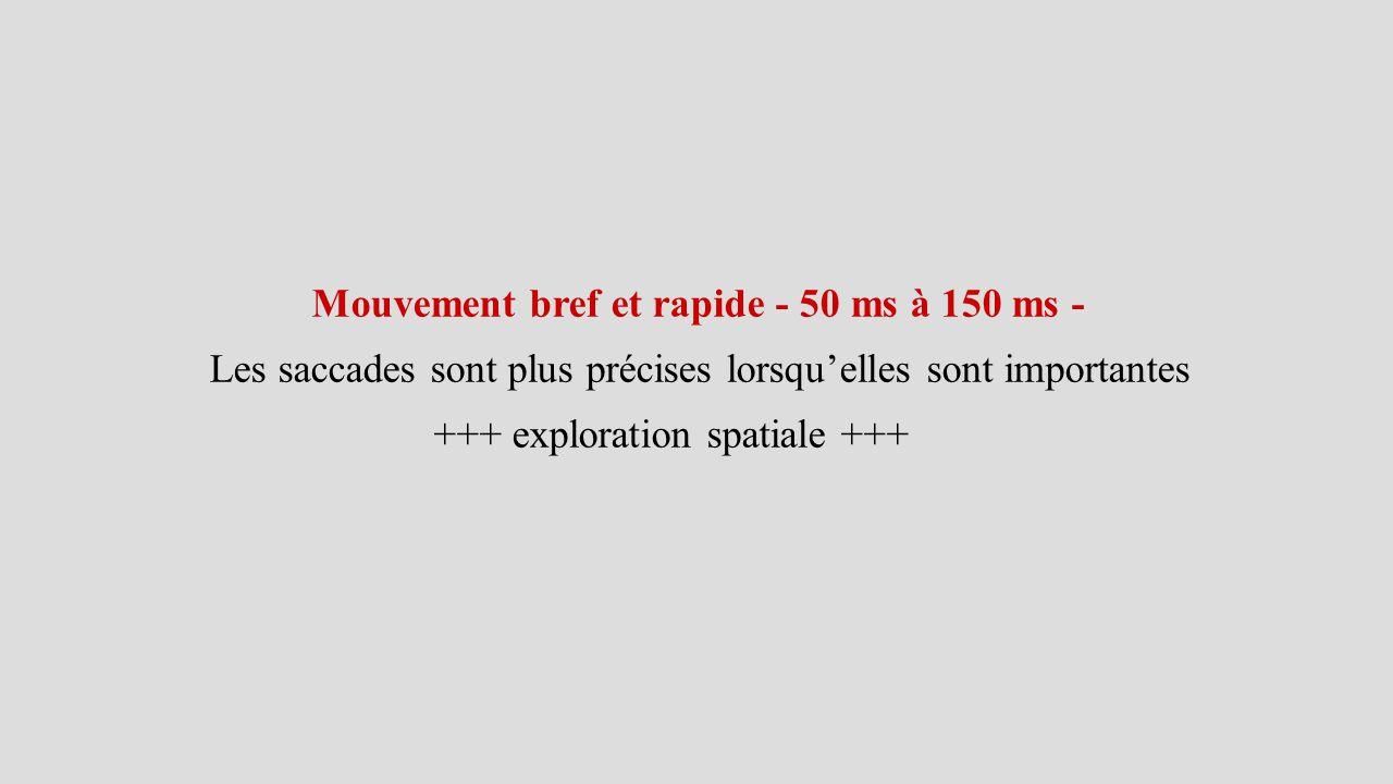Mouvement bref et rapide - 50 ms à 150 ms - Les saccades sont plus précises lorsqu'elles sont importantes +++ exploration spatiale +++