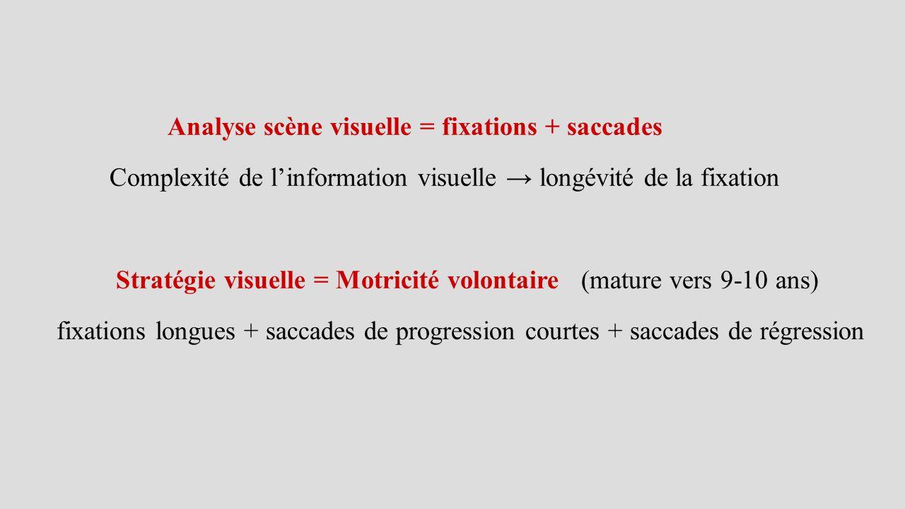 Analyse scène visuelle = fixations + saccades Complexité de l'information visuelle → longévité de la fixation Stratégie visuelle = Motricité volontair