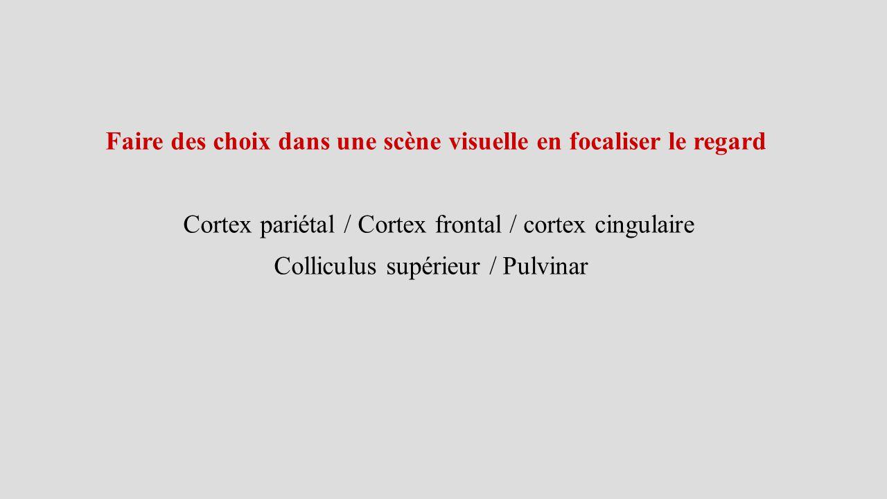 Faire des choix dans une scène visuelle en focaliser le regard Cortex pariétal / Cortex frontal / cortex cingulaire Colliculus supérieur / Pulvinar