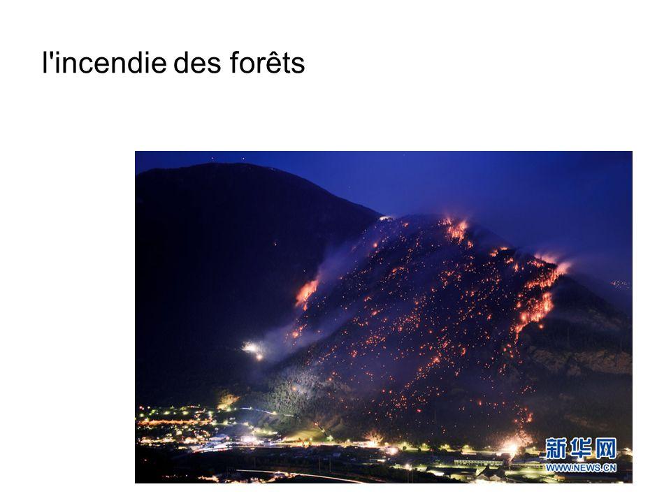 l incendie des forêts