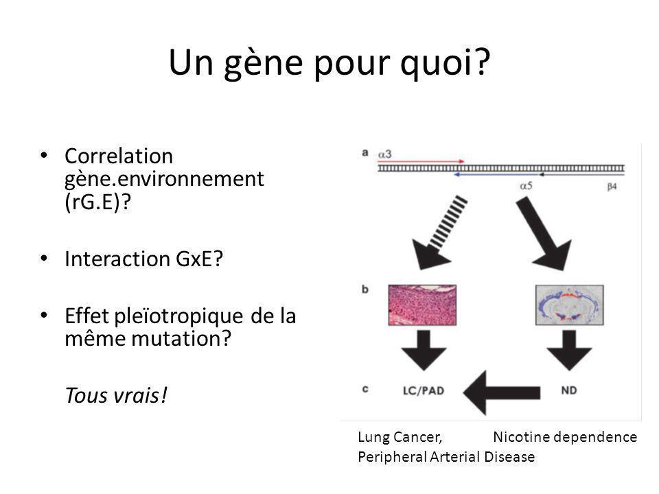 Un gène pour quoi. Correlation gène.environnement (rG.E).
