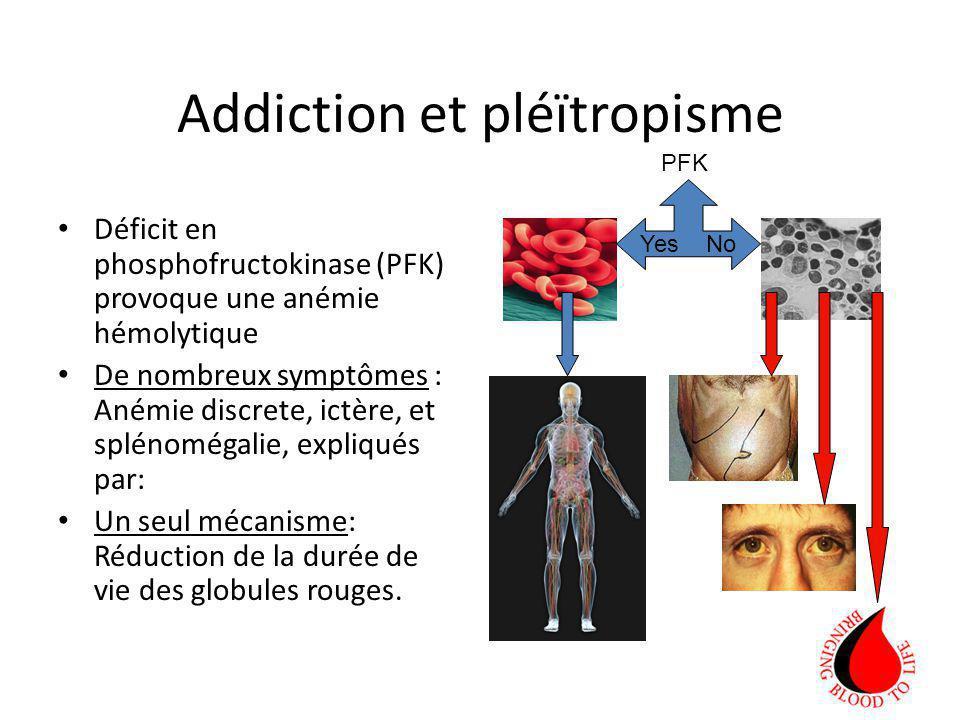 Addiction et pléïtropisme Déficit en phosphofructokinase (PFK) provoque une anémie hémolytique De nombreux symptômes : Anémie discrete, ictère, et splénomégalie, expliqués par: Un seul mécanisme: Réduction de la durée de vie des globules rouges.