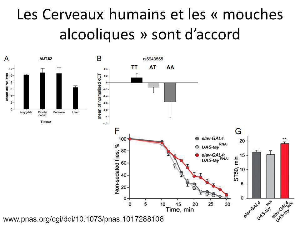 Les Cerveaux humains et les « mouches alcooliques » sont d'accord www.pnas.org/cgi/doi/10.1073/pnas.1017288108