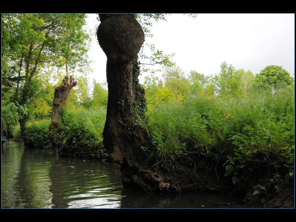 Le 20 mai 2010 les marais mouillés de la Venise Verte obtiennent le label « Grand Site de France »