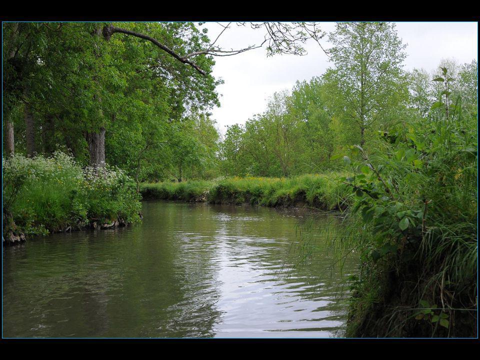 Les canaux ont différents noms : le fossé, la conche ( 4 à 8 m de large ), le bief, la route d'eau, la broue, la gonnelle, la rigole ( 12 à 14 m de large ), le canal, le contre-bot
