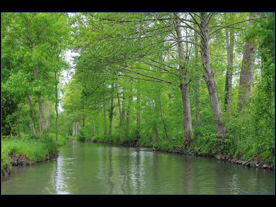 Le marais mouillé étant tributaire des inondations c'est ce qui explique que s'y soient développées des cultures à cycle court comme celle des mojhettes ou haricots blancs dont le cycle est de trois mois ce qui correspond à la période hors risque d'inondation